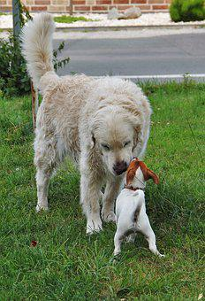 Small And Large, Two Dogs, Welcome, Big And Small