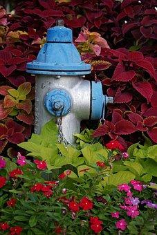 Fire Hydrant, Hydrant, Blue, Silver, Floral, Urban