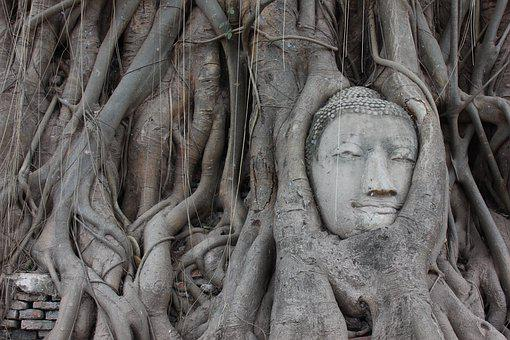 Ayutthaya, Buddha, Roots, Thailand, Temple, Image