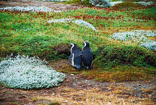 Magellan Penguins, Love, Bff, Best Friends, Forever