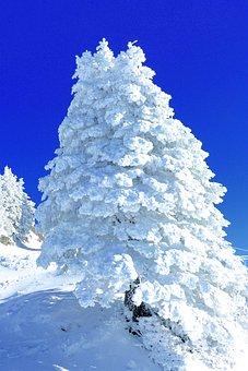 Snow Sculpture, Rigi, Central Switzerland