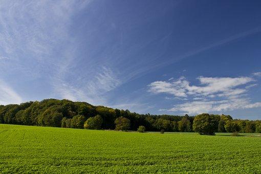 Field, Himmmel, Forest, Trees, Landscape, Green, Nature