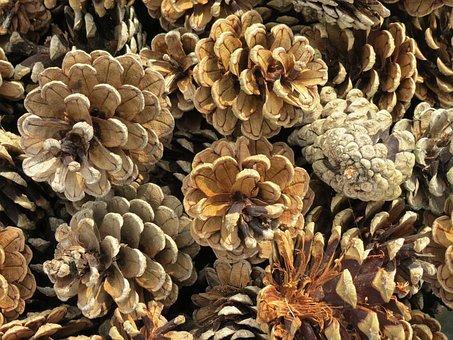 Pine Cones, Pine, Conifer, Tap, Close Up, Nature, Scale