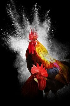 Cock, Year Of The Rooster, Black Background, Collage