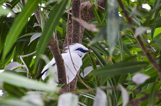 Bali Starling, Bird, Exotic, Exotic Bird, Nature