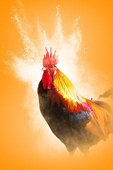 Cock, Year Of The Rooster, Bird, Feathers, Bright
