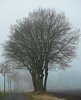 Fog, Winter's Day, Protected Landscape Area, Ffh