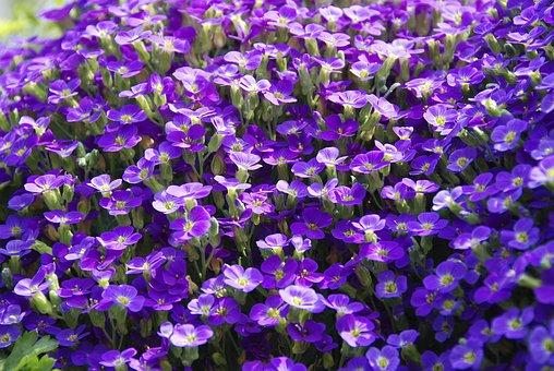 Plant, Viola, Violet Plant, Herbaceous Plant, Blossom