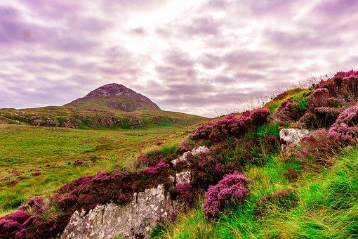 Ireland, Meadow, Green, Grass, Nature, Landscape