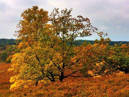 Germany, Lower Saxony, Lüneburg Heath, Autumn