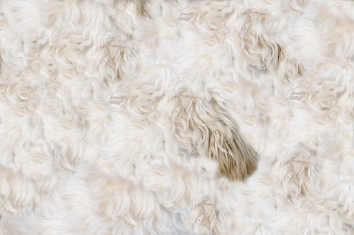 Animal, Dog, Fur, Pelt, Skin, Leather, Warm, Texture