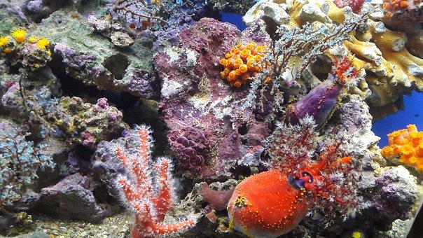 Fish, Aquarium, Ocean, Undersea World, Sea