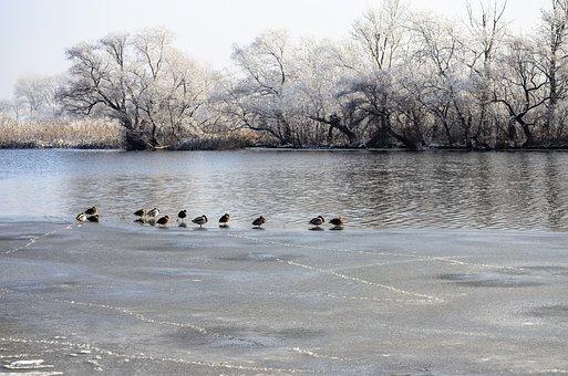 Winter, River, Bird, Nature, Water, Fauna, Cold