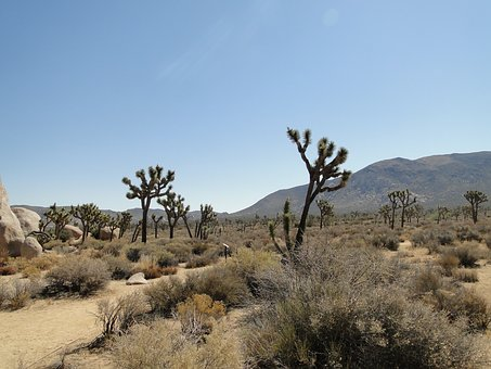 Desert, Joshua Tree, National Park, Usa, Sky, Yucca