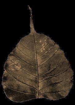 Bodhi, Leaf, Wilted, Awakening, Enlightenment, Buddhism