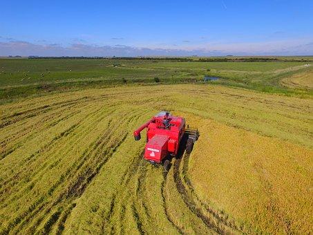Crop Rice, Harvester, Massey Ferguson