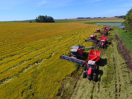 Crop Rice, Tractor, Harvester, Massey Ferguson