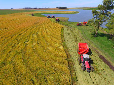 Crop Rice, Tractor, Massey Ferguson