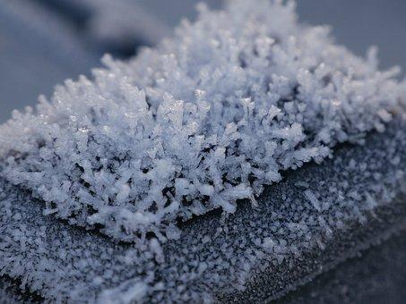 Ice Winter, Macro, Beautiful, Nature, Close, Plant