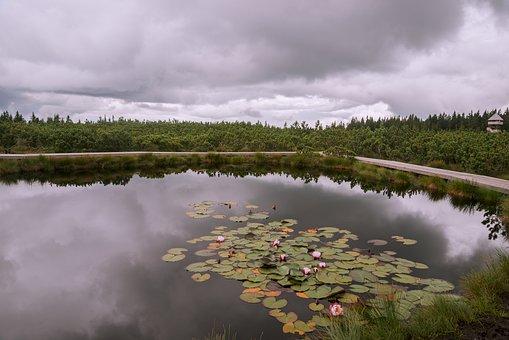 Pond, Pohorje, Rogla, Lovrenc, Jezero, Dark, Water