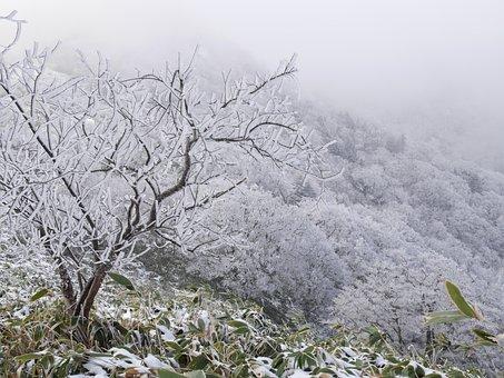 Winter Mountain, Rime, Winter, Cold Wave, Sasa Bamboo
