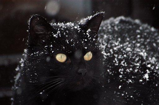 Cat, Black Cat, Snow