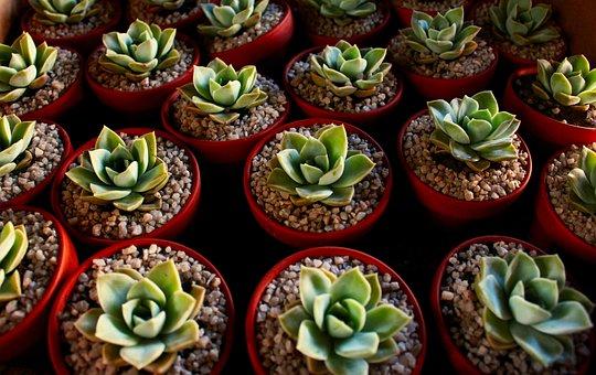 Succulent, Plant, Green, Collection, Cactus, Houseplant