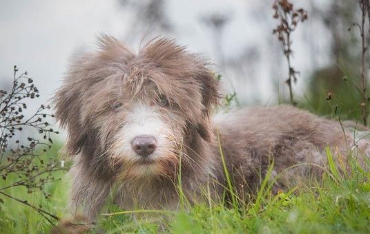 Dog Puppy, Small Dog, Cute Look, Sweet, Animal Photo