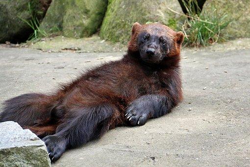 Zoo, Lüneburg Heath, Animal, Forest, Bear, Wild