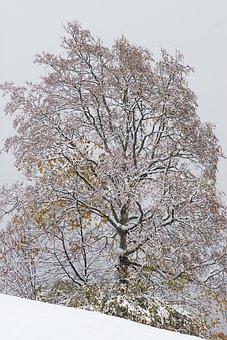 Winter, Tree, Deciduous Tree, Kahl, Wintry, Snow