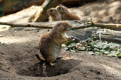 Zoo, Lüneburg Heath, Animal, Forest, Meerkat, Wild