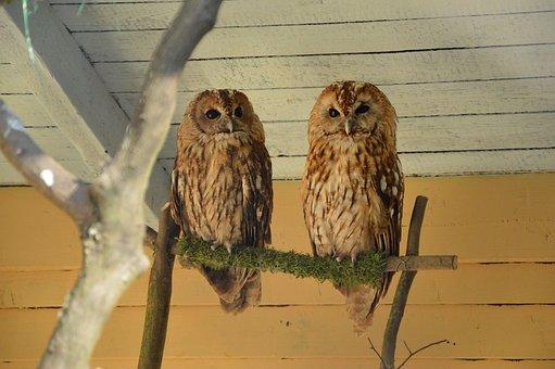Owl, Tawny Owl, Owls, Zoo, Forest Animal, Predator