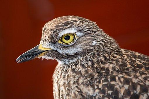 Bird, Feathers, Beady Eye, Wading Bird, Beak, Avian