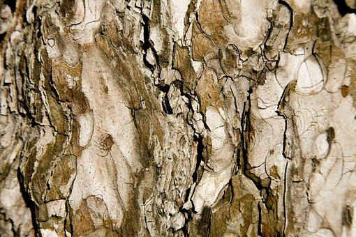 Tree, Texture, Brown, Macro, Timber, Wood Tissue