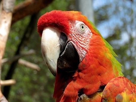 Ara, Parrot, Light Red, Bird, Colorful, Plumage, Red