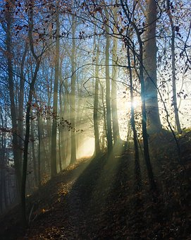 Fog, Forest, Winter, Nature, Cold, Mood, Forest Path