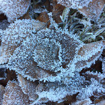 Leaves, Crystals, Frost, Winter, Frozen, Iced, Nature