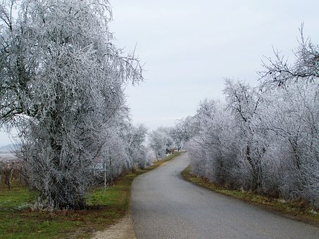 Winter Landscape, Frosted Alley, Hoary, Nature