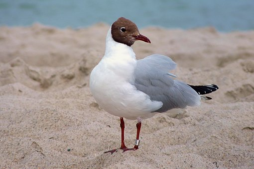 Seagull, Beach, Baltic Sea, Holiday, Holidays, Bird