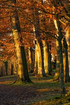 Autumn, Tree, Golden Autumn, Light, Forest, Red, Leaves