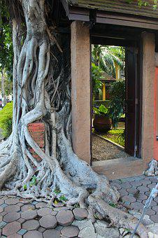 Tree Roots, Overgrown, Tree, Root, Temple, Old, Ancient