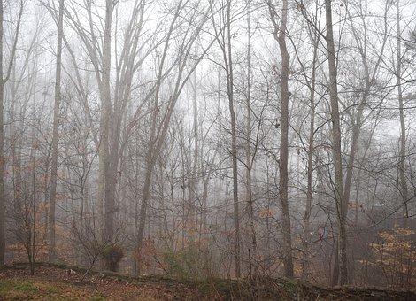 Trees Through The Fog, Winter, Tree, Plant, Nature