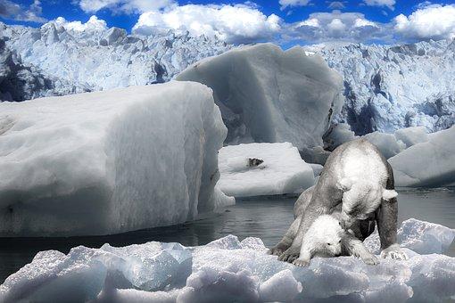 Animals, Polar Bear, Predator, Bear, Arctic, Ice Floe