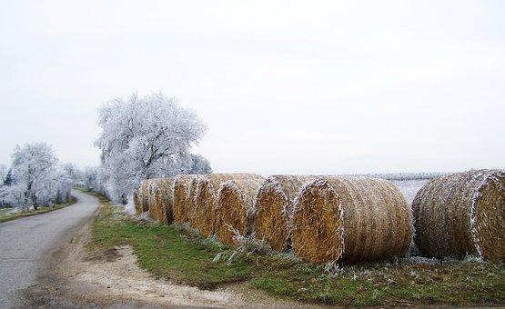 Winter, Hoary, Rimy, Winter Landscape