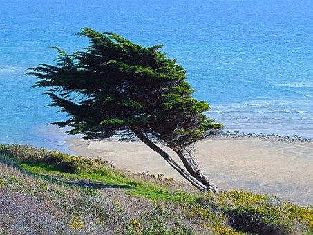 Sea, Dune, Sand, Beach, Ocean, Nature, Landscape, Side