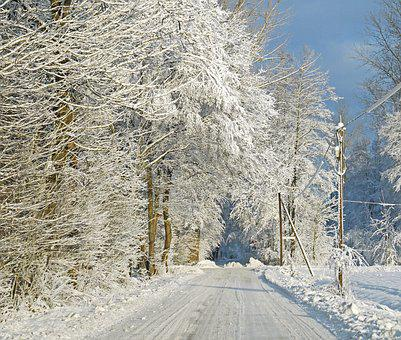 In Winter Forest, Snow, Snow Load, Forest Path