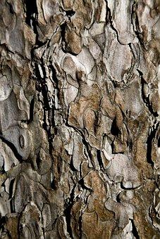 Tree, Shell, Wood Tissue, Texture, Detail, Macro