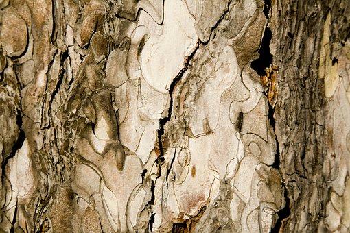 Texture, Tree, Shell, Detail, Macro, Wood Tissue
