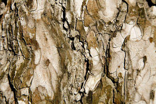 Tree, Texture, Brown, Macro, Timber, Wood Tissue