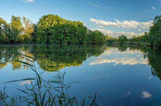 Pond, Lake, Landscape, Nature, Trees, Cypress, Bald